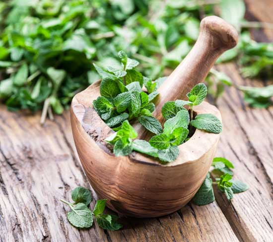 آشنایی با طریقه مصرف دمنوش، روغن، عرق و گیاه نعناع