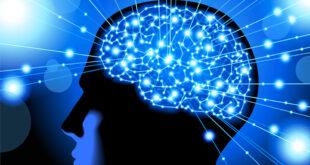 بهترین خوراکی برای تقویت حافظه   برای تقویت حافظه چه بخوریم؟