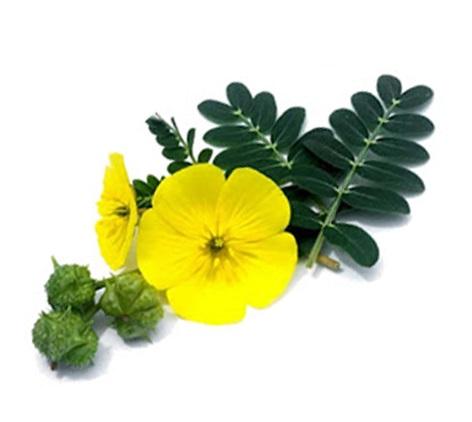 خواص خارخاسک و خاصیت گیاه خارخاسک برای مردان و زنان و میل جنسی