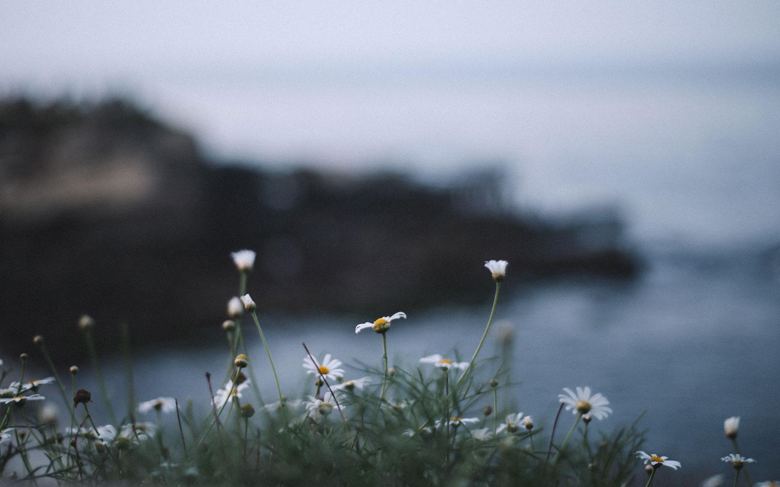 با خاصیت گل بابونه آشنا شوید